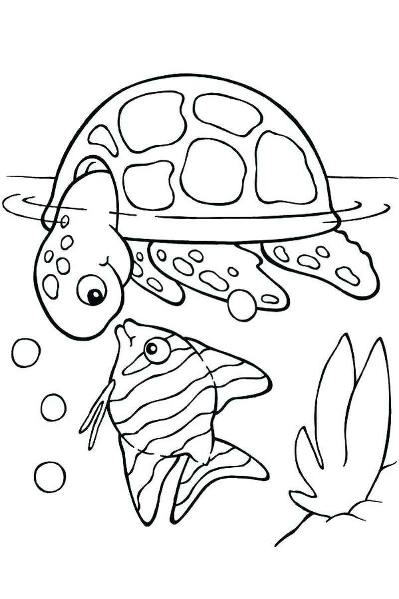 Baby Animal Coloring Pages Google