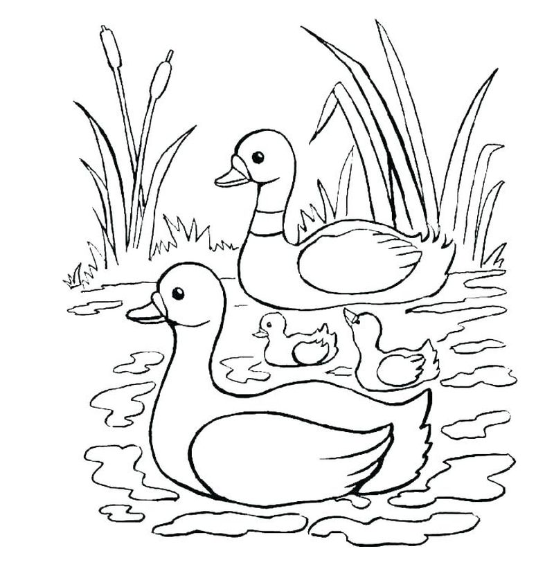 Baby Duck Coloring Pages To Print