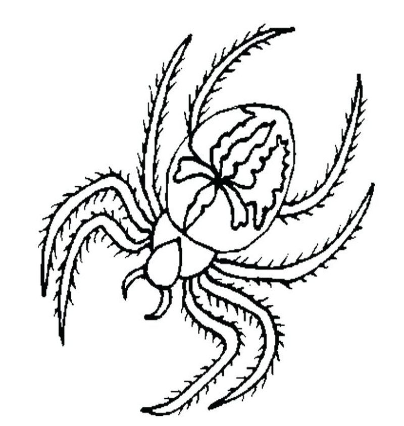Baby Spiderman Coloring Pages 1