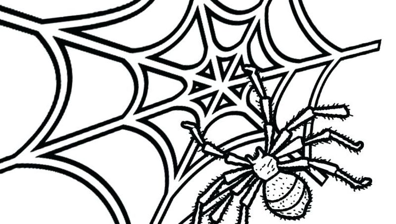Bat And Spider Coloring Pages