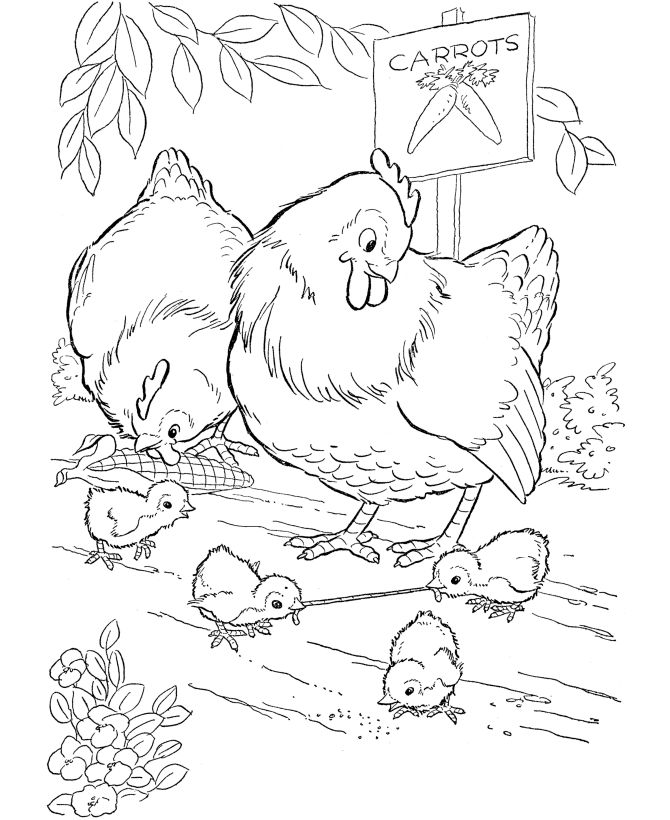 Chicken Coloring Pages For Girls