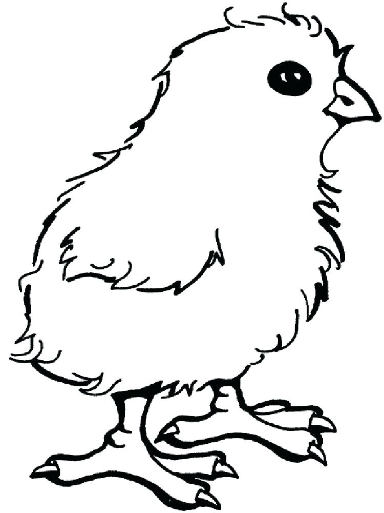 Chicken Coloring Pages For Kids Printable