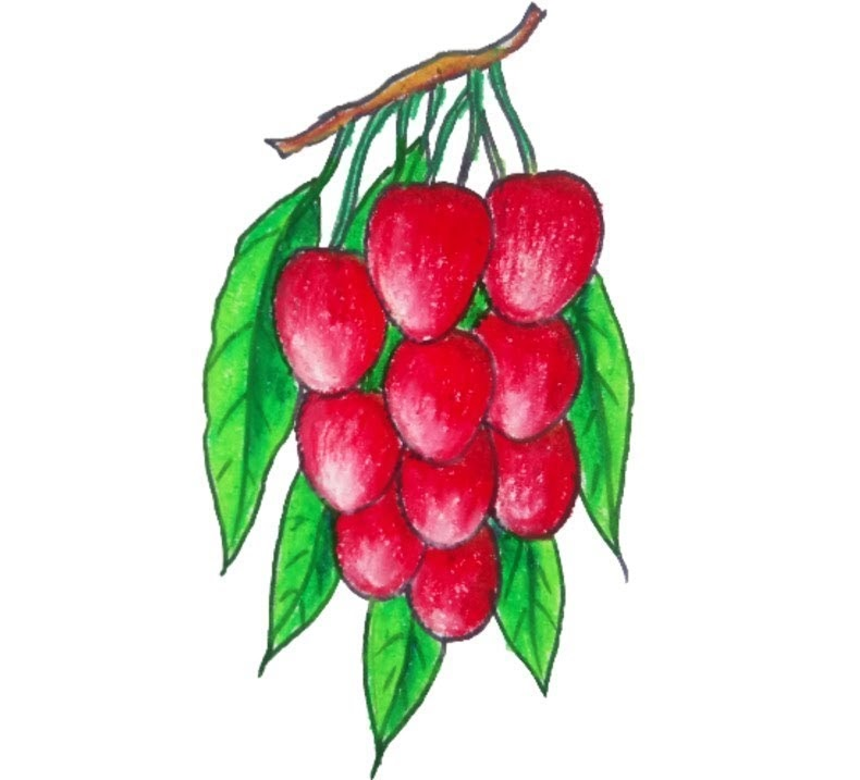 Lychee coloring