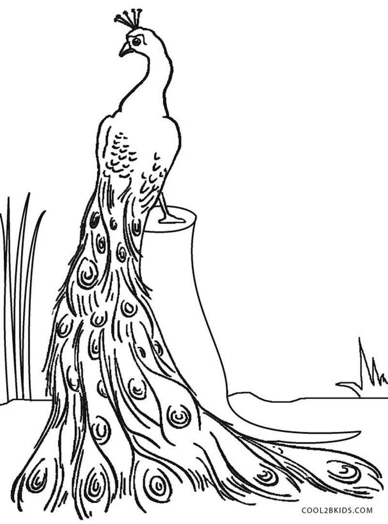 Peacock Coloring Pages Idea