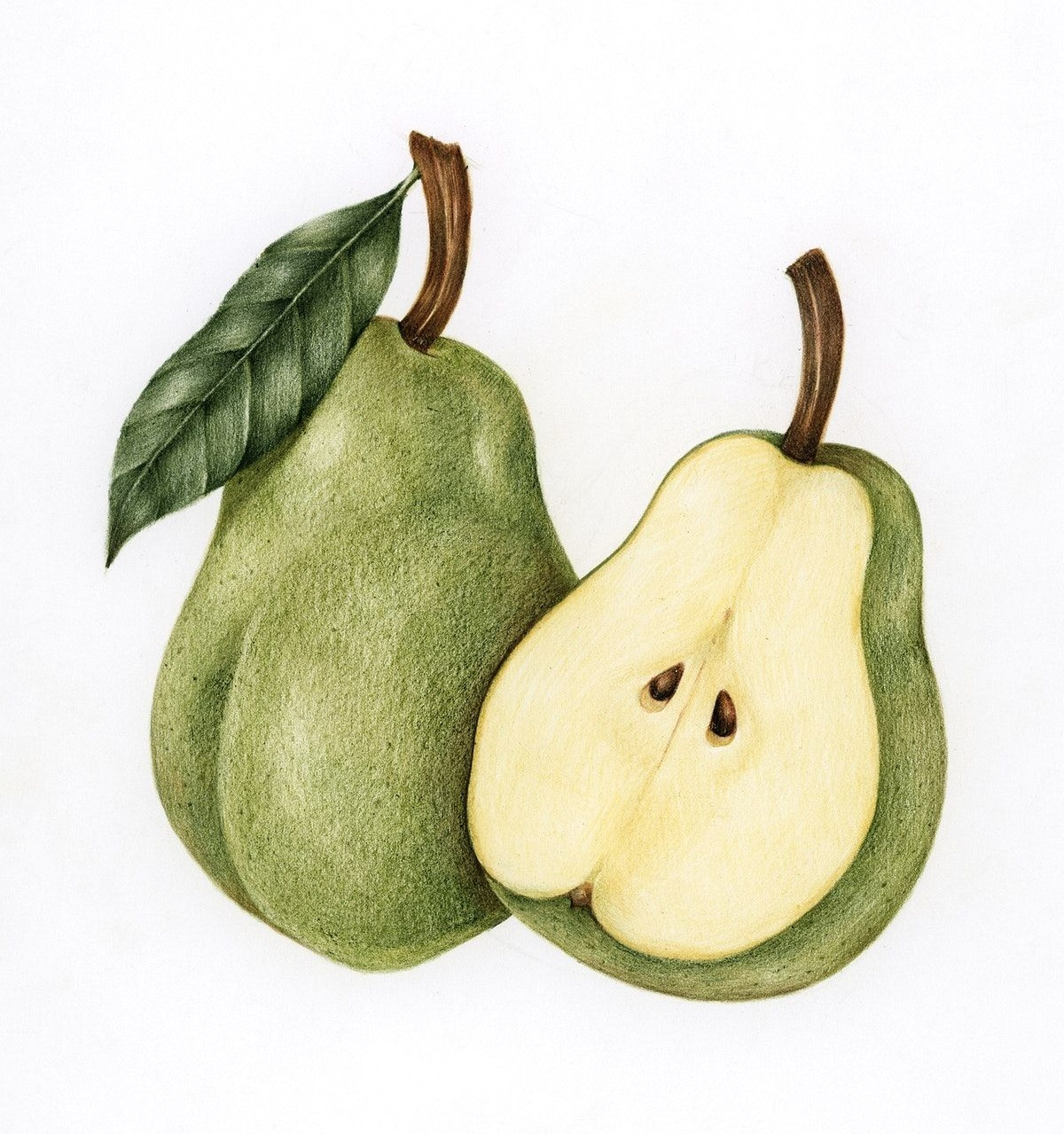 Pear coloring page