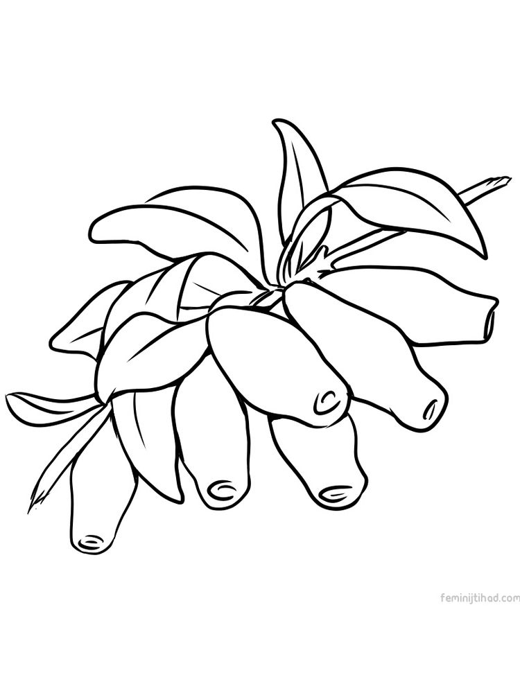 Printable honeyberry coloring pictures print