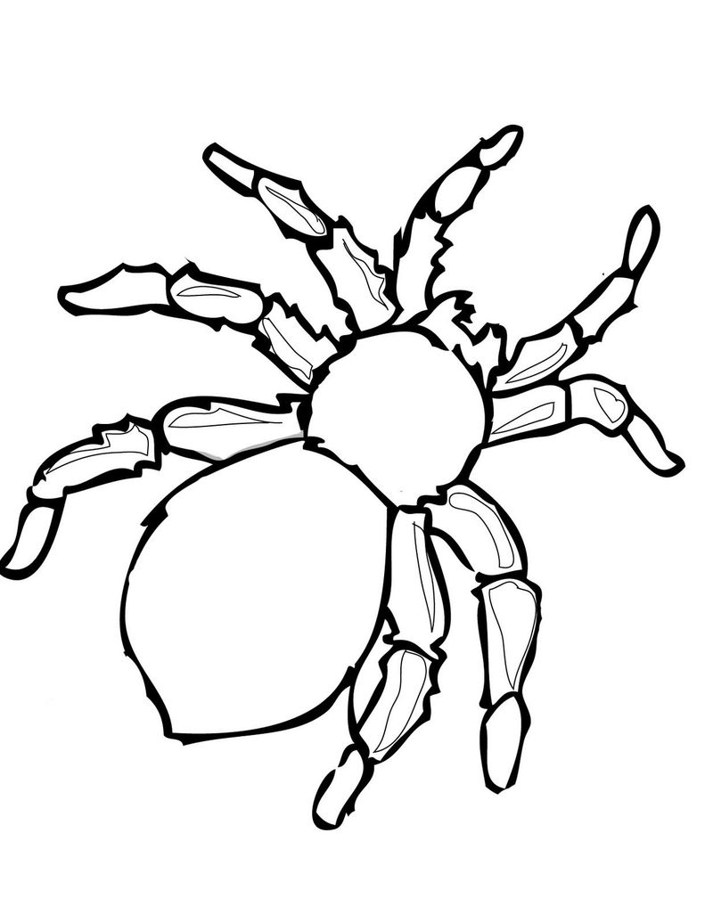 Spider An Coloring Pages