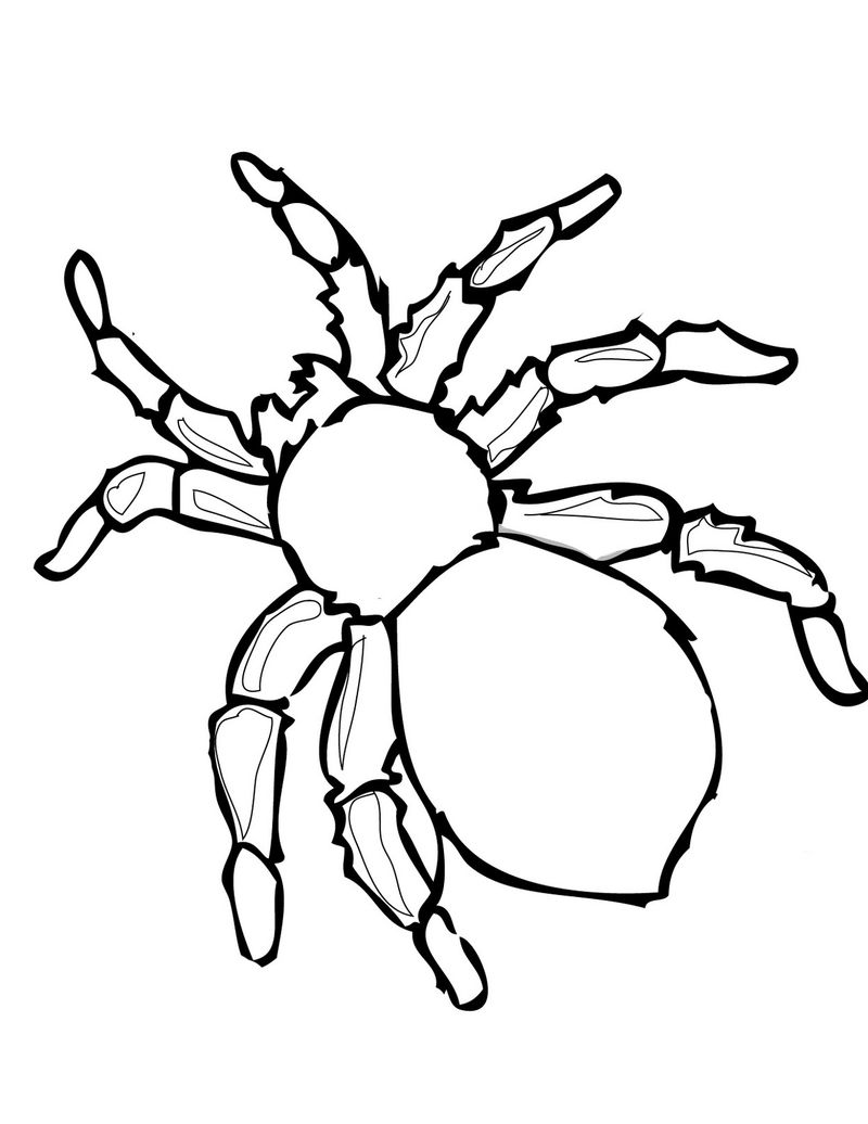 Spider Book Coloring Pages