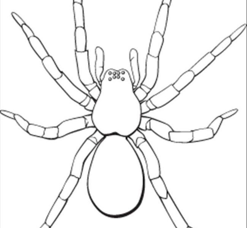 Spider Coloring Pages Online