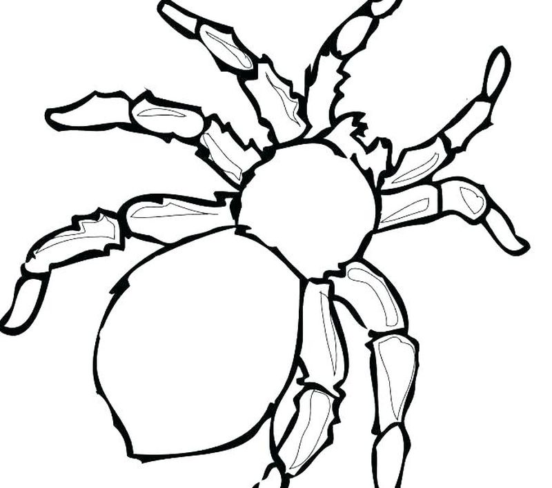 Spider Coloring Pages Pdf