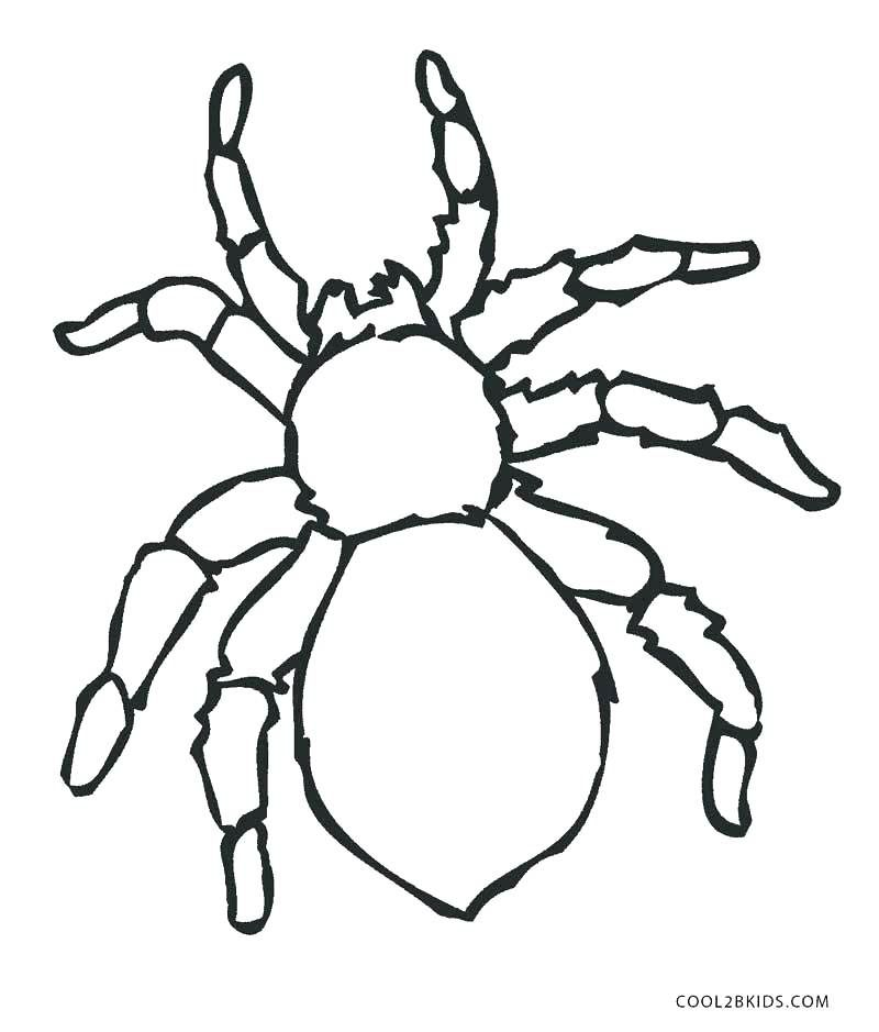 Spider Colouring Pages