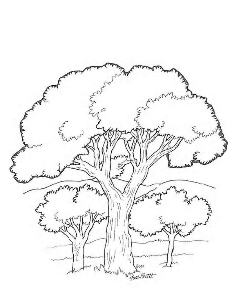 almond tree coloring pages