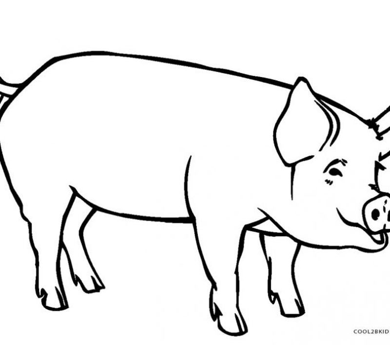 animal pig coloring pages