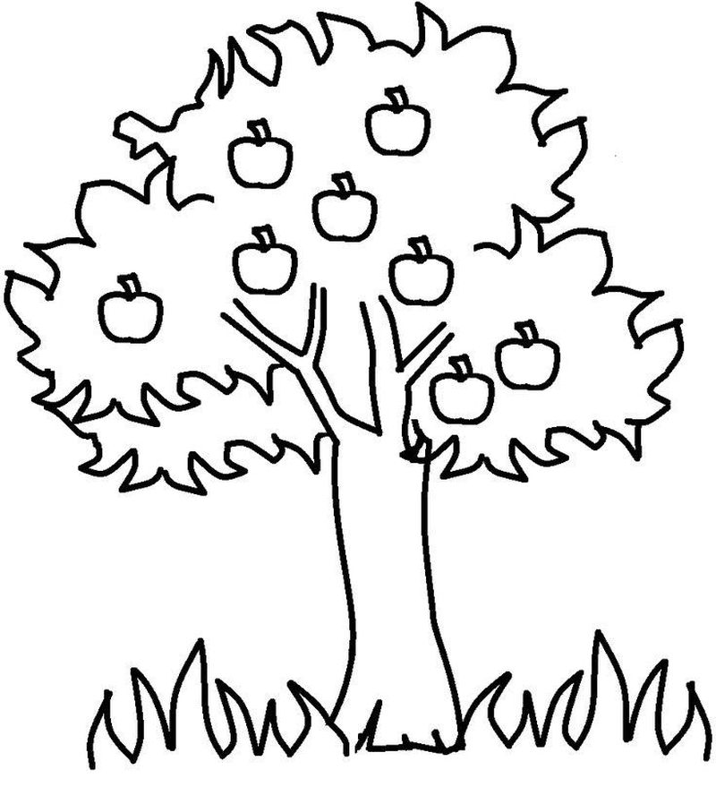apple tree coloring pages to print