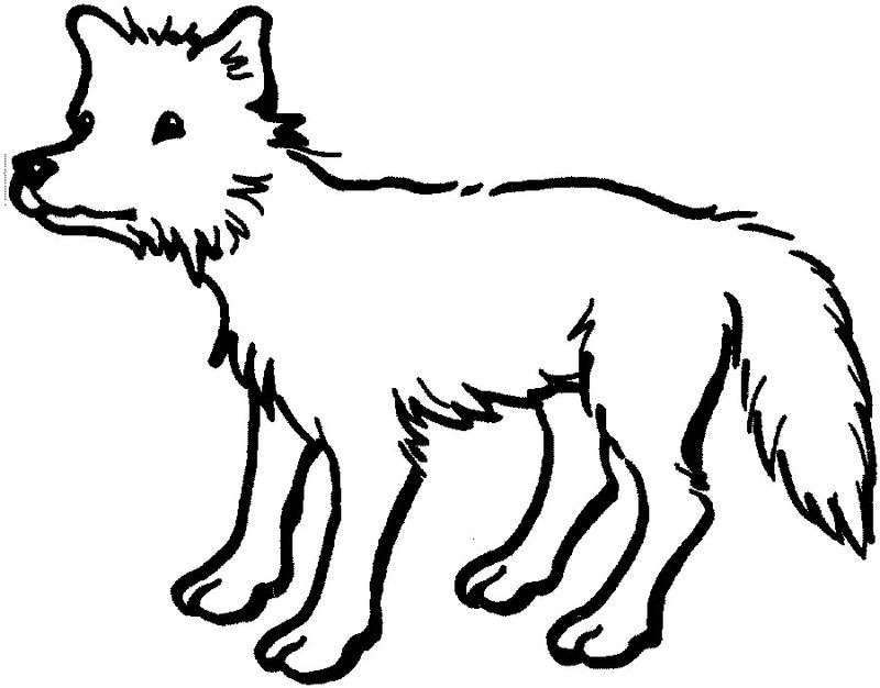 baby animal colouring pages