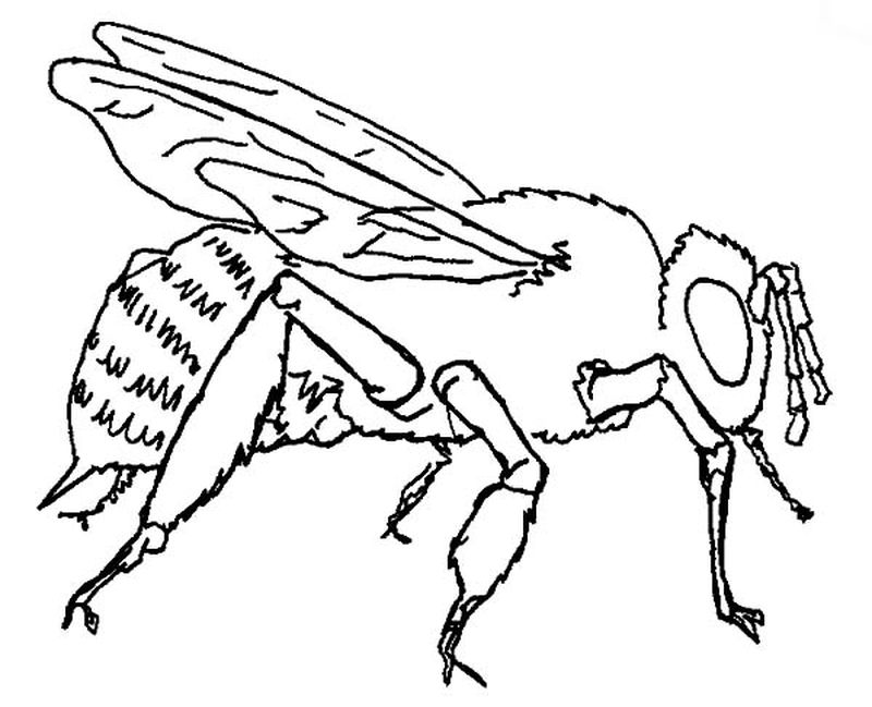 bee colouring pages