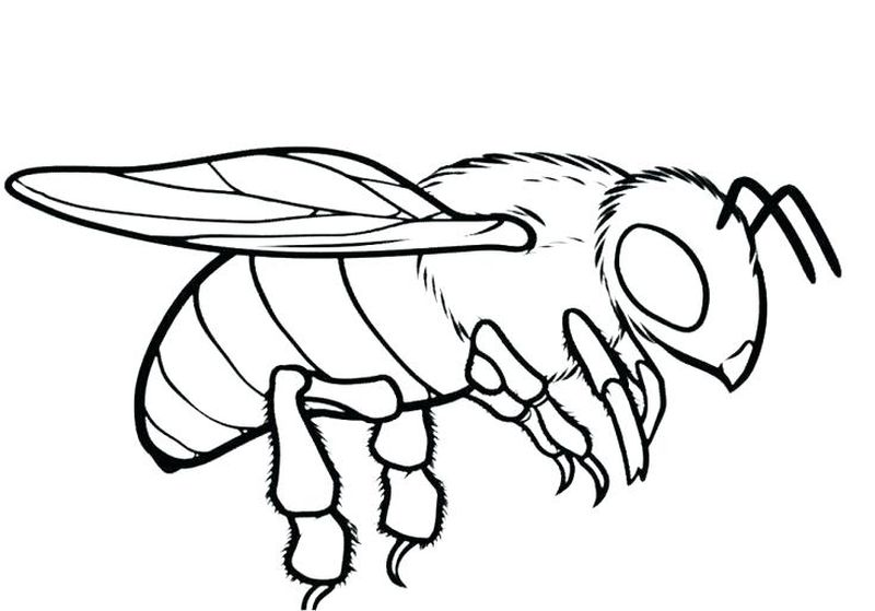 beehive coloring pages