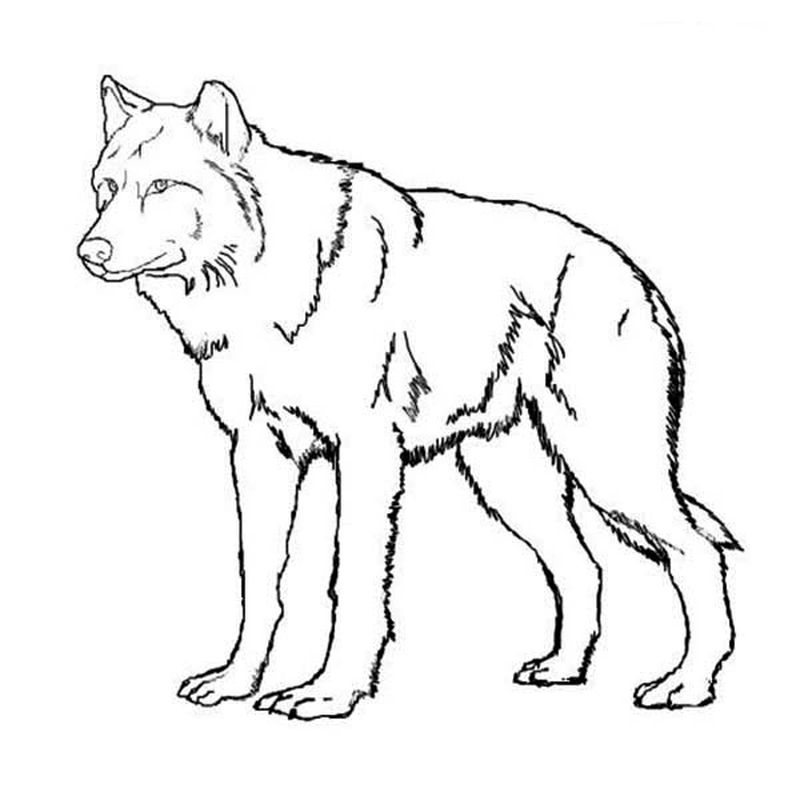 best wolf coloring pages printable