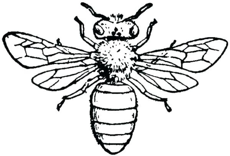 charmy bee coloring pages