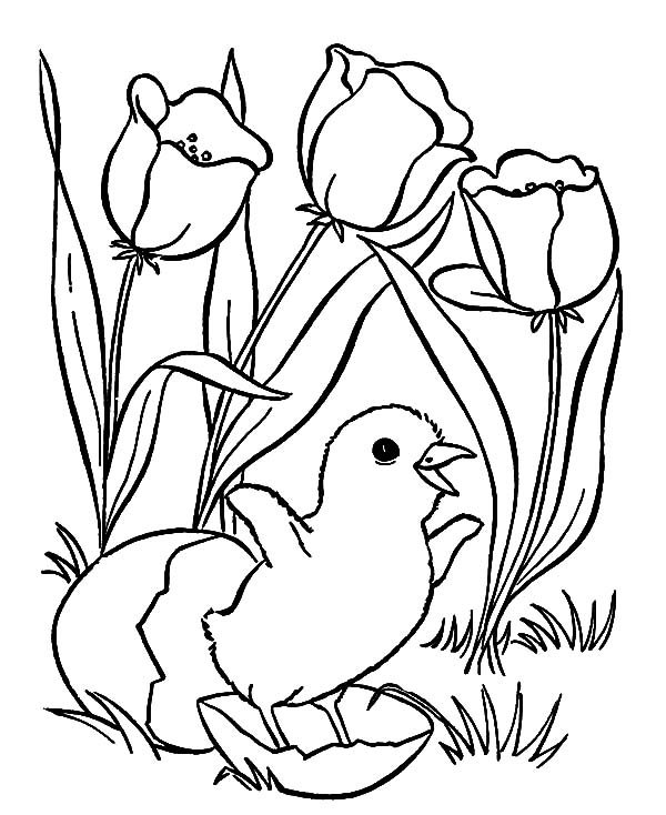 chicken and chick coloring pages