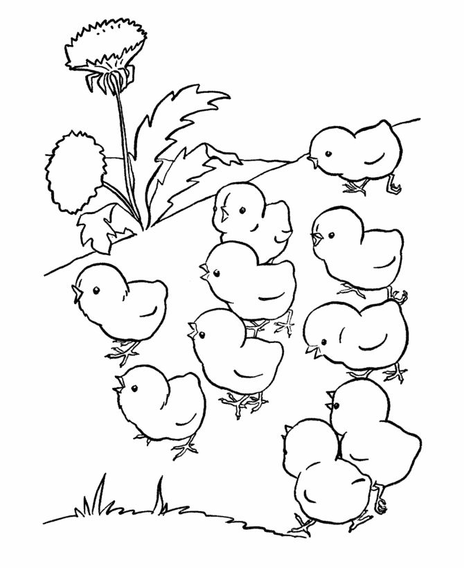 chicken food coloring pages