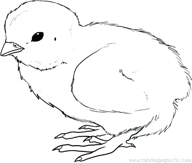 chicken leg coloring pages