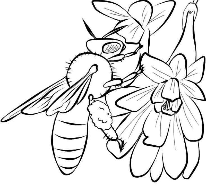 coloring book pages bee