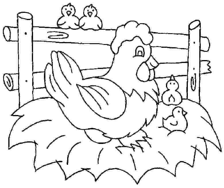 coloring pages for chicken