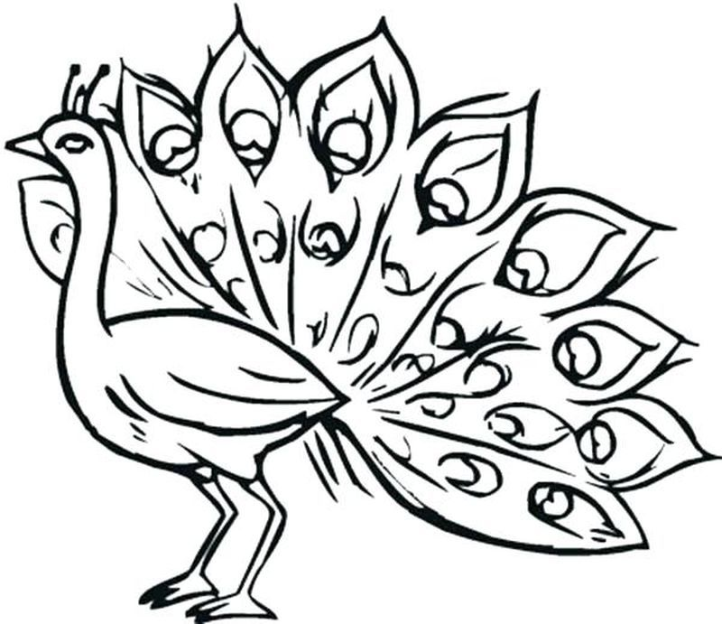 coloring pages of peacock feathers