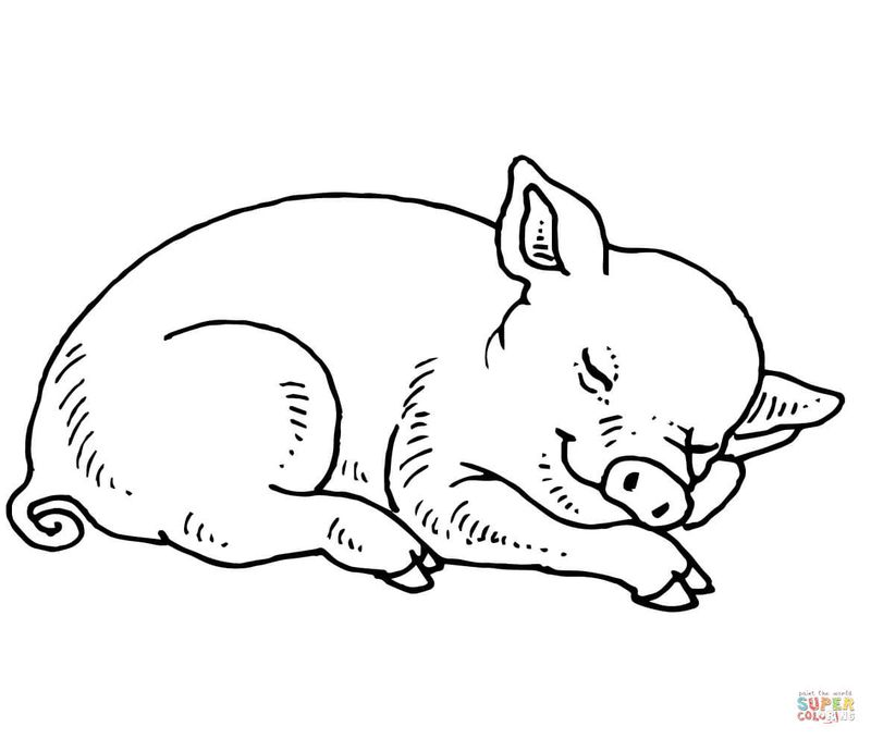 cow and pig coloring pages