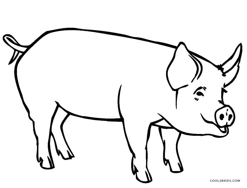 cute pig coloring pages printable
