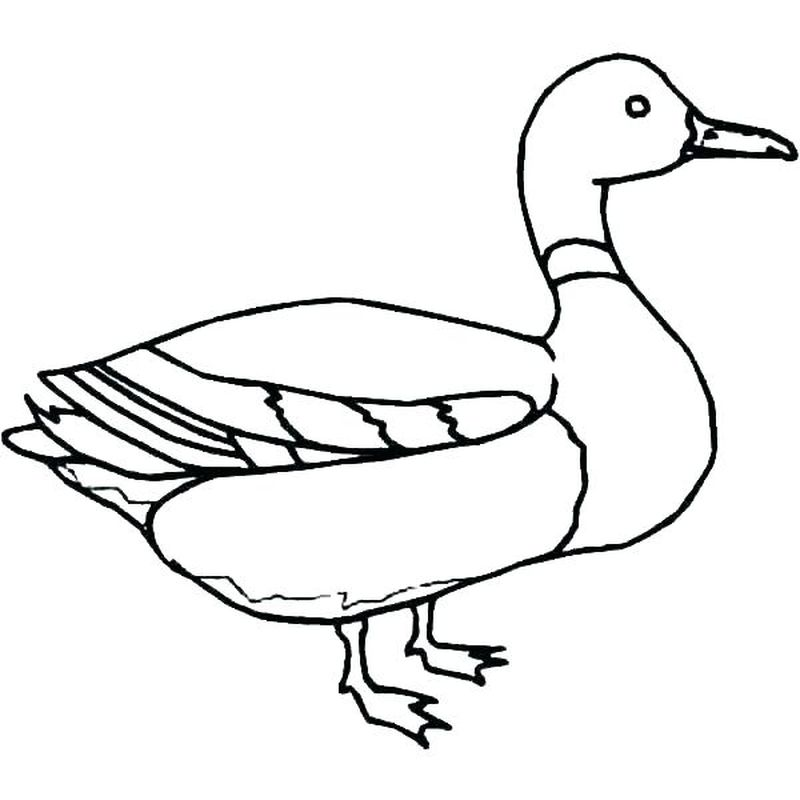 donald duck coloring pages to print for free
