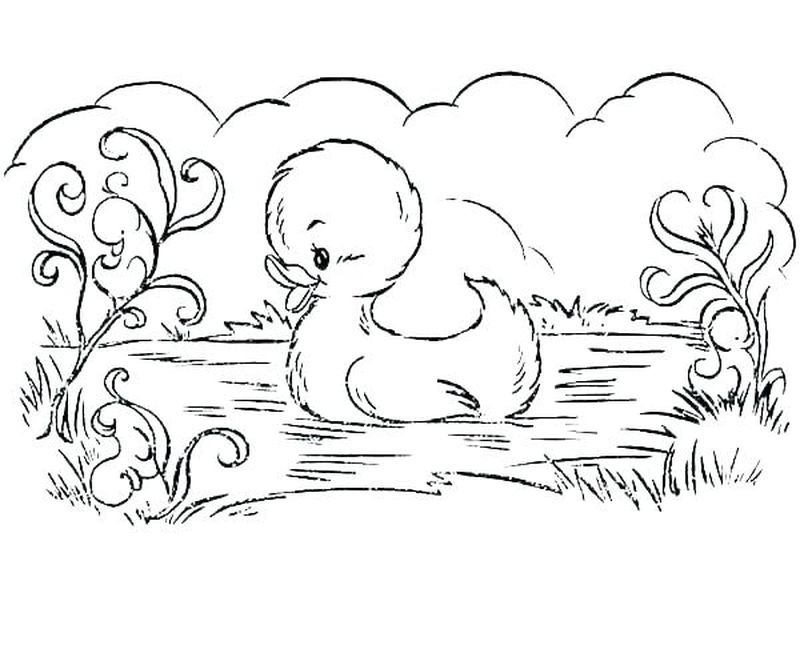 duck coloring pages momjunction