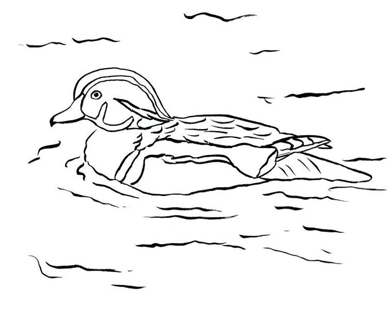 duck coloring pages pdf