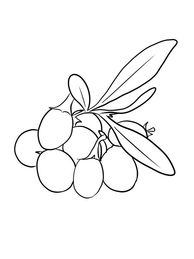 easy goji berries coloring images free