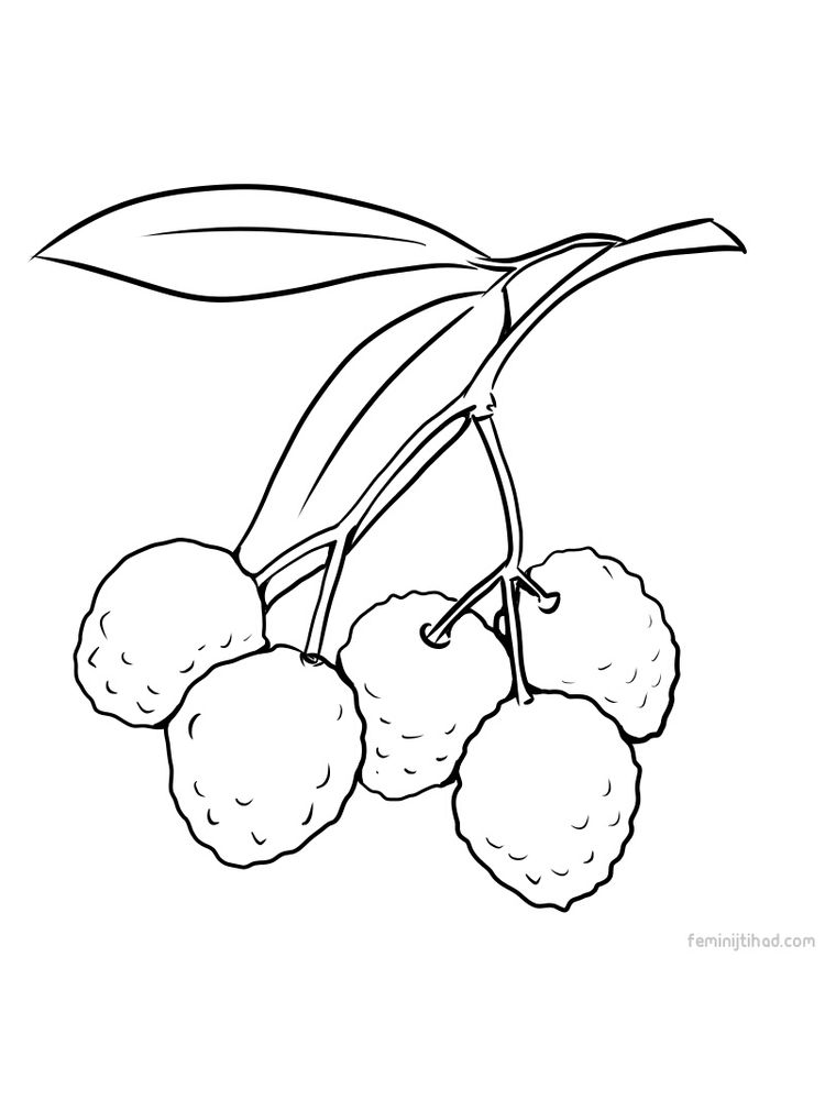 easy lychee coloring page download free