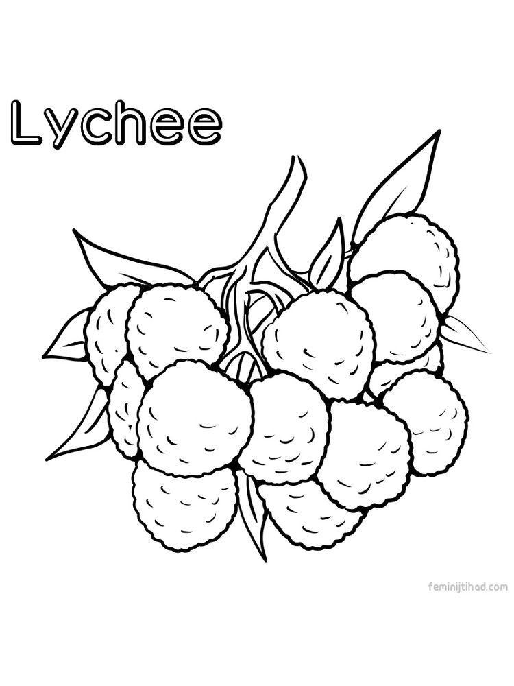 easy lychee coloring pages