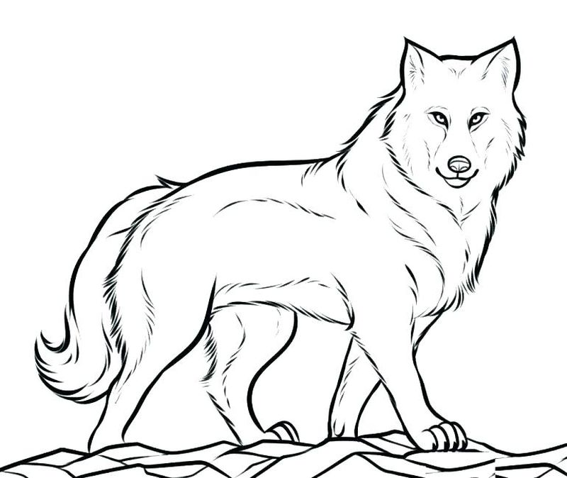 easy wolf coloring pages free