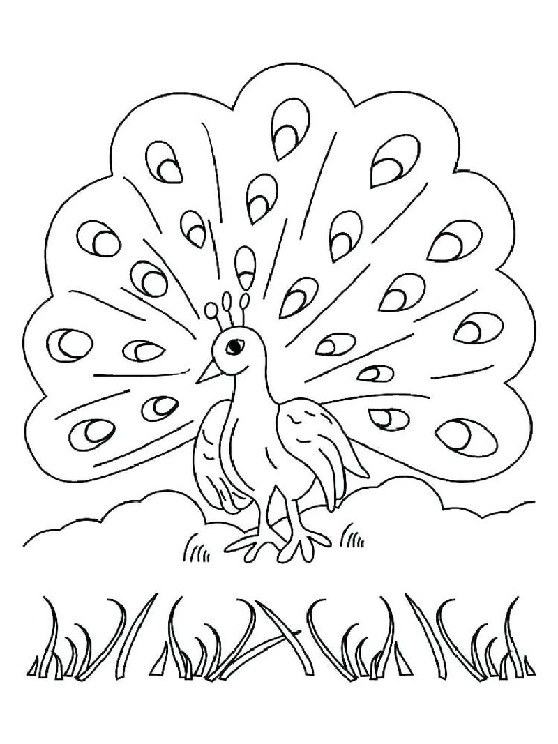 free Baby Peacock Coloring Pages