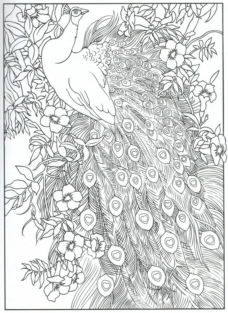 free Coloring Pages Peacock Printable