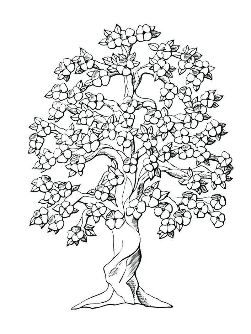 free coloring pages tree