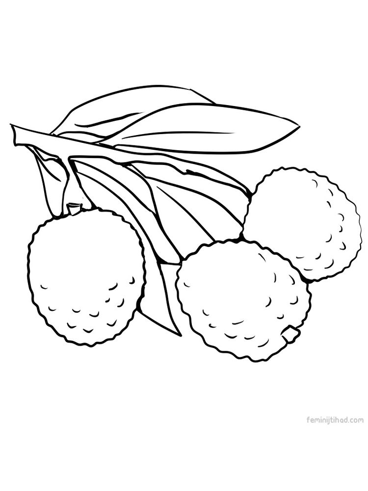 free lychee picture for coloring print