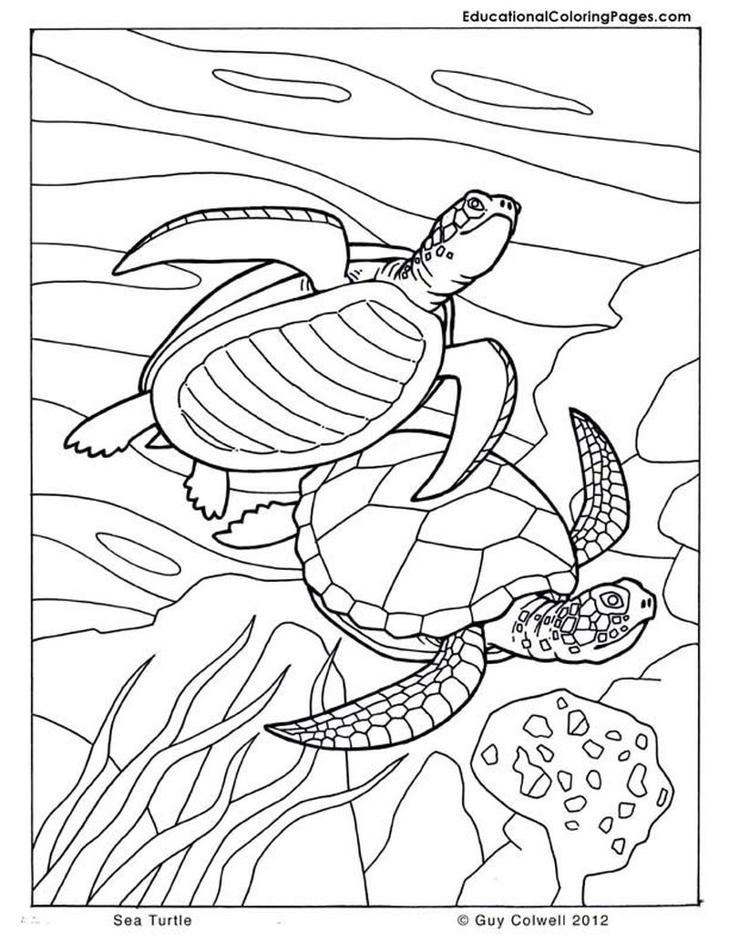 free ocean coloring pages for adults