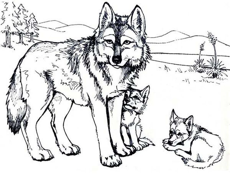free online wolf coloring pages pdf