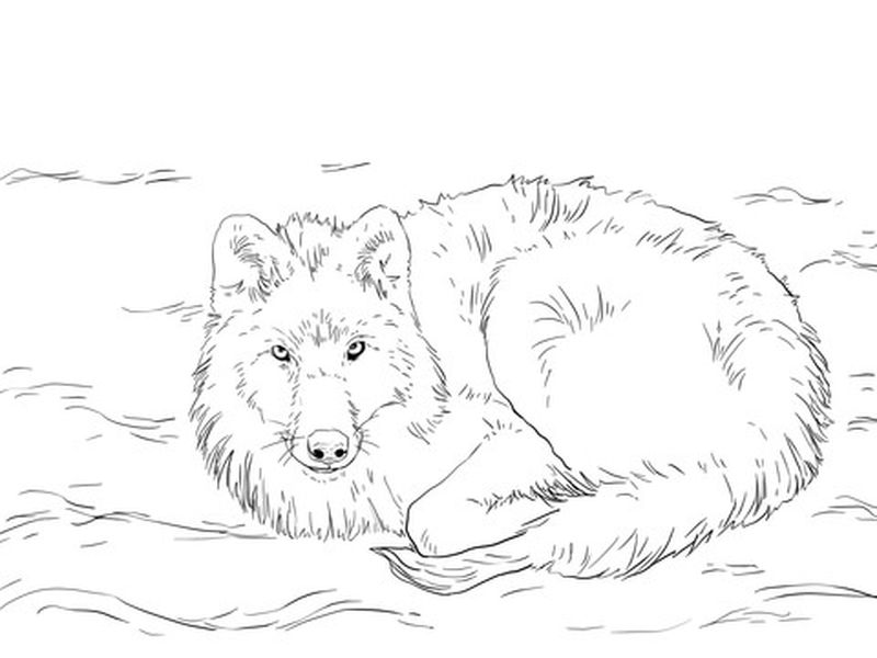 free wolf coloring pages to print