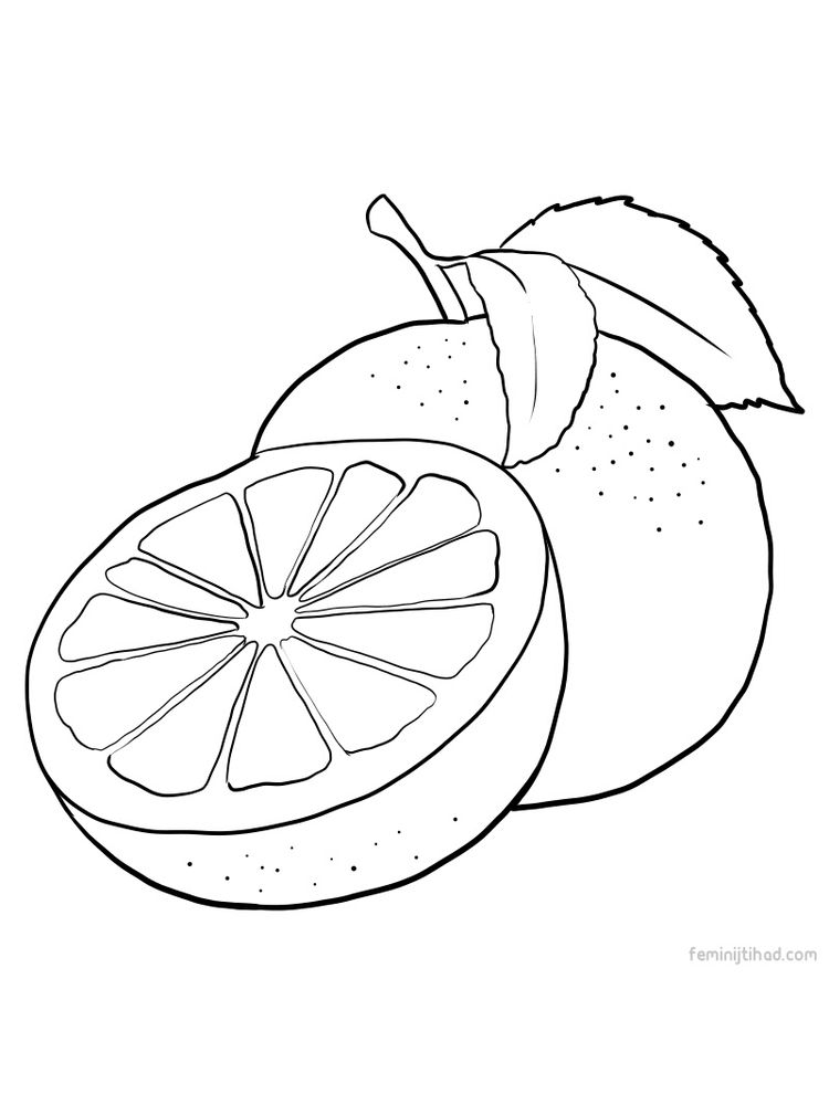 grapefruit images for coloring