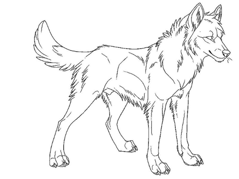 grey wolf coloring pages free