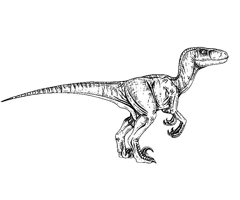 jurassic world blue coloring pages to print