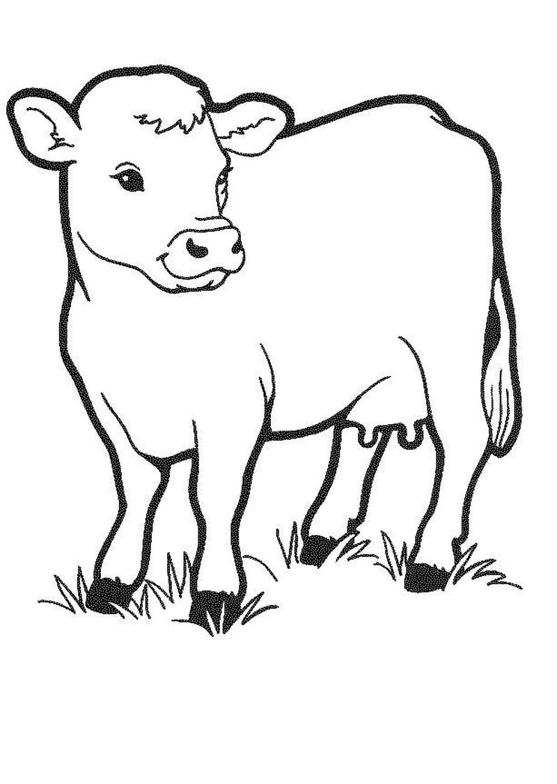 mother and baby animal coloring pages