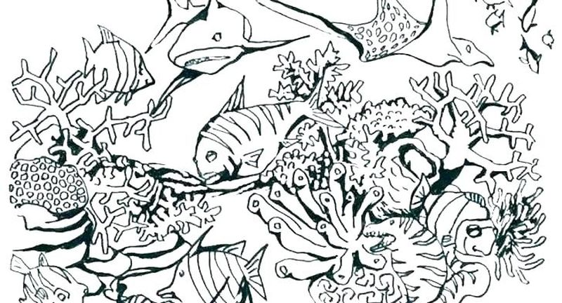 ocean coloring pages crab